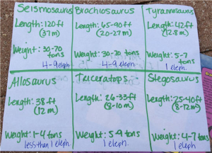 measuring the length of dinosaurs7