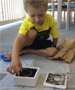 composting with worms 2