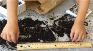 composting with worms 7
