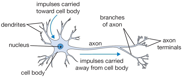 Candy Neuron Curious Little Classrom – Neuron Worksheet